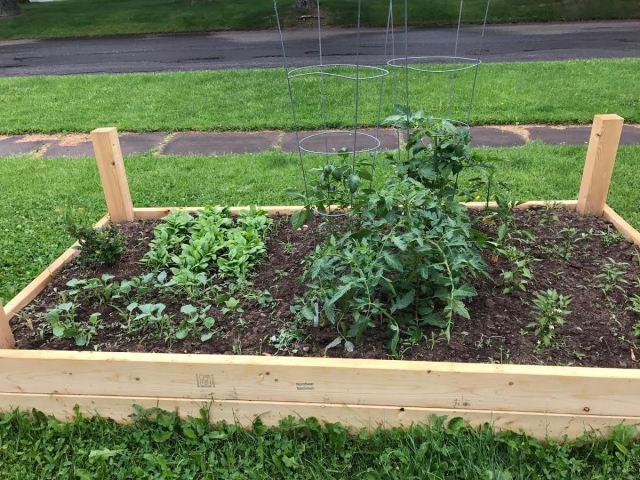 raised garden5