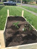 rasied garden4